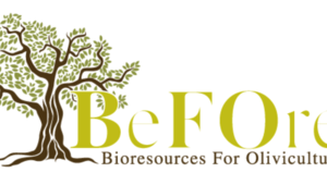 H2020 BeFOre Project : For a Common protocol for conservation of the olive genetic resources