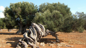 International meeting on Integrated actions against Xylella Fastidiosa