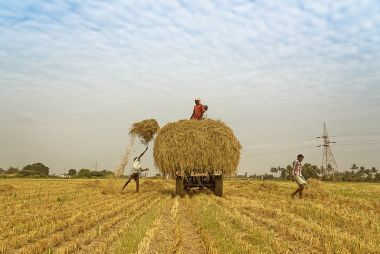 As COVID-19 spreads, no major concern for global food security yet
